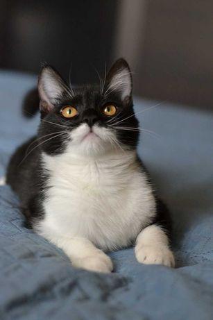 красунечка чорно-біла муркотушечка 7м