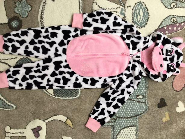 Krowa z misia na 2-4 lata