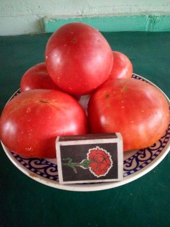 Помидоры Семена Розовый мед Томаты 50 шт.