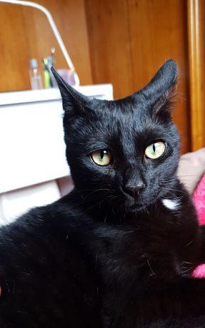 Gatinho pretinho para adoção