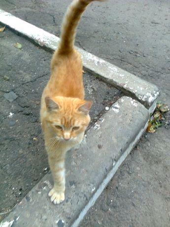 Рыжий котик, Iсторiя Украiна