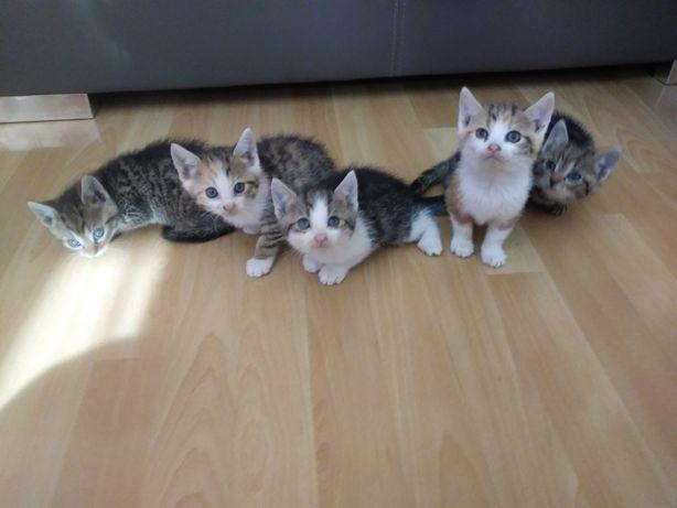 Małe kotki do oddania w dobre ręce