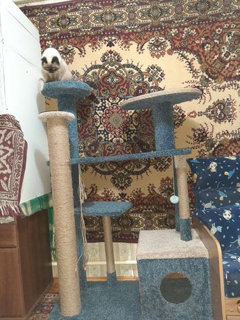 Продам игровой комплекс для котов