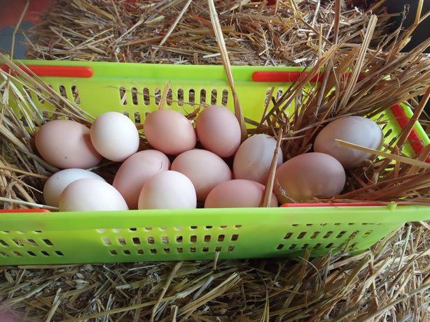 Jaja wiejskie smaczne zdrowe