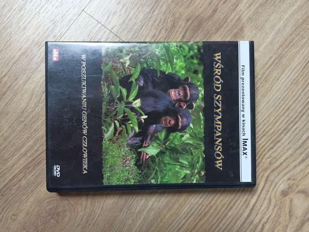 Film dvd wśród szympansów w poszukiwaniu genów człowieka