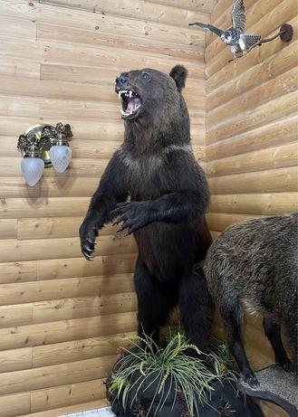 Продам Медведя чучело