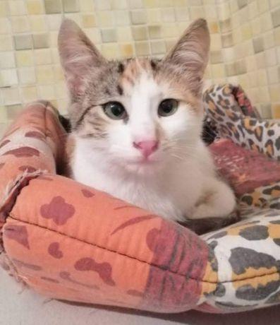 МАРКИЗА- кошка праздник и позитив!!!