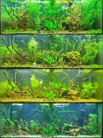 Planos de fertilização e adubos npk para plantas de aquário