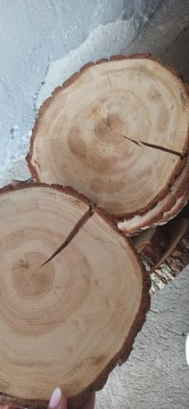 Plastry drewna 21 szt