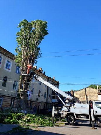 спиливание деревьев, обрезка деревьев, корчевание. Срочный выезд.