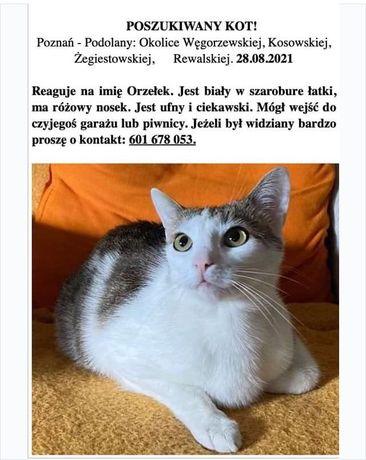 Poszukiwany kotek Orzełek NAGRODA