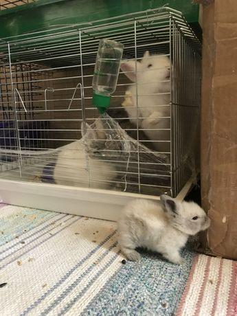 Кролики крохи аренда продажа