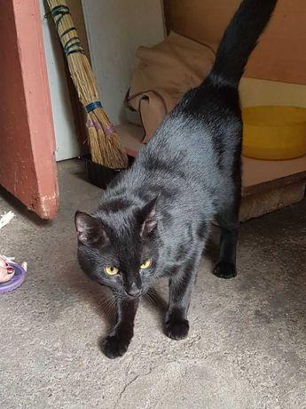 Красивенный, добрый, черный, домашний, замечательный котик (кот)
