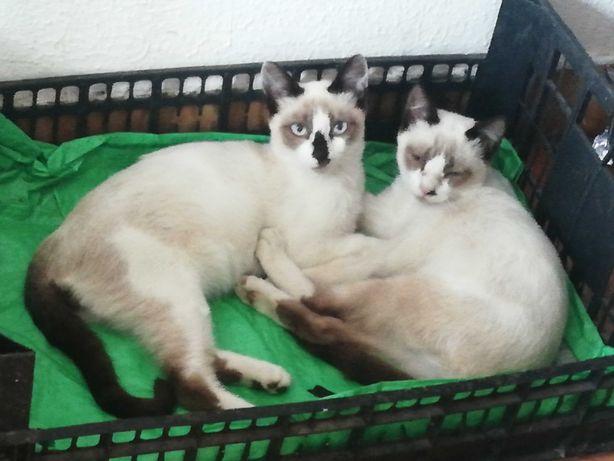 Ofereço gatinhos, M/F com dois meses, são lindos, em Marinhais