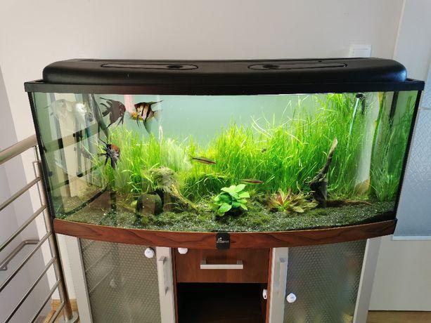 Akwarium 240L KOMPLET z szafką Diversa, filtr Fluval, oświetlenie LED