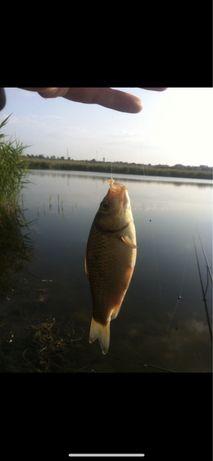 Дача для отличной рыбалки и отдыха