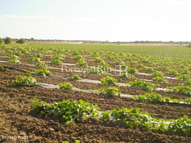Herdade do meloal com 24 hectares