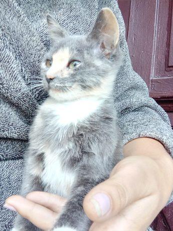 Віддам кошенятко в добрі руки