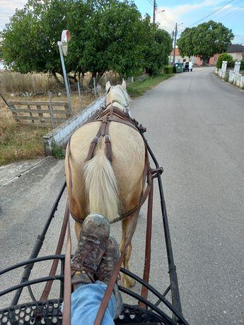 Vendo cavalo palomino
