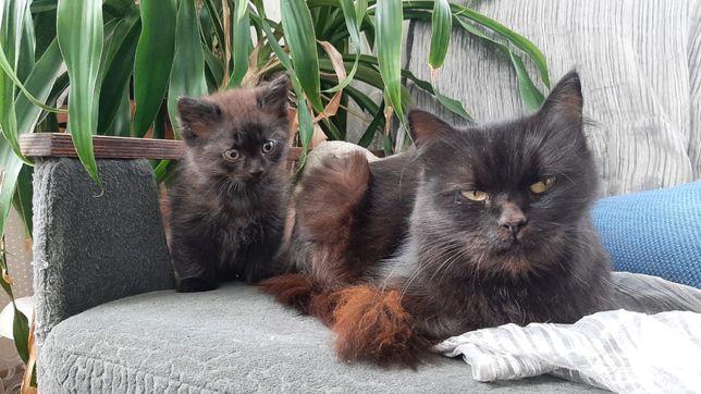 Кошенята в добрі руки,хлопчики,котинята безкоштовно