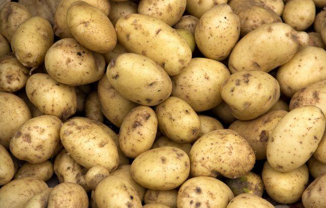 Ziemniaki*Vineta*Bellarosa*Denar* Dowóz w cenie