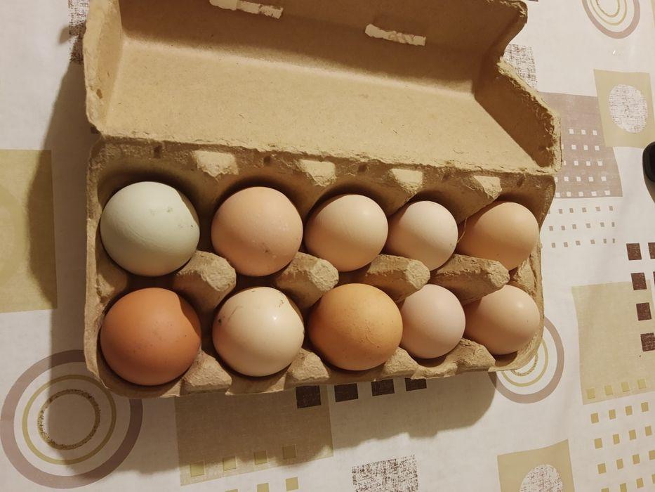 Jaja wiejskie z wolnego wybiegu po 10 sztuk Chorzemin - image 1