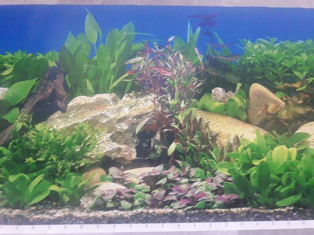 Tło dwustronne do akwarium-fototapeta wysokość 48,50cm