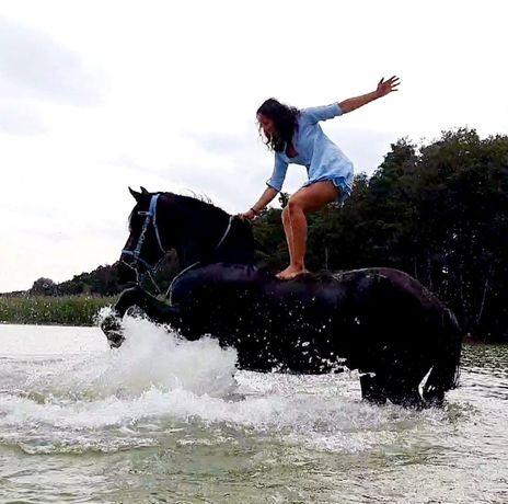 Dzierżawa konia fryzyjskiego