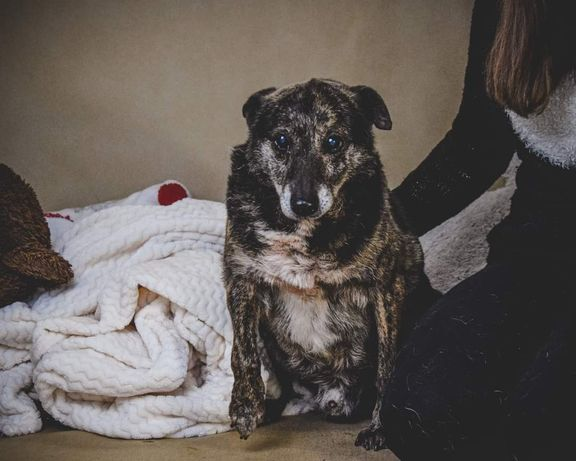 Karat to 1 z najstarszych psów ze schroniska! Tak bardzo kocha ludzi!!