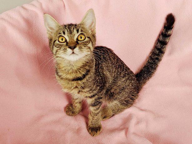 Ариша, котенок  - крошка (2.месяца) хочет на ладошку