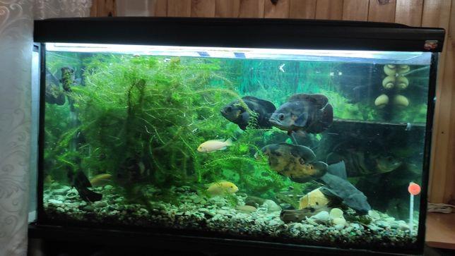 Продам аквариум б.у счас рабочий буду менять на больше