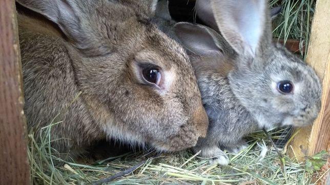 Продам кроликов подростков