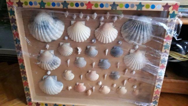 Quadro conchas