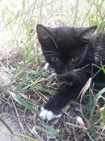 Czarny kotek do adopcji. Za darmo.