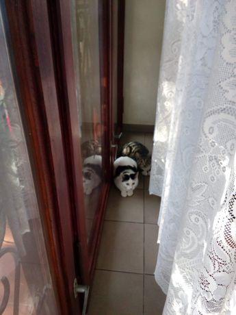 Kotki do adopcji, koty, kot, kocur