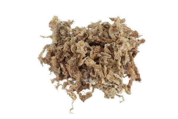 Musgo esfagno desidratado do Chile