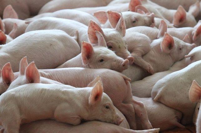 pasza odpadowa dla zwierząt odpady poprodukcyjne z piekarni dobra cena