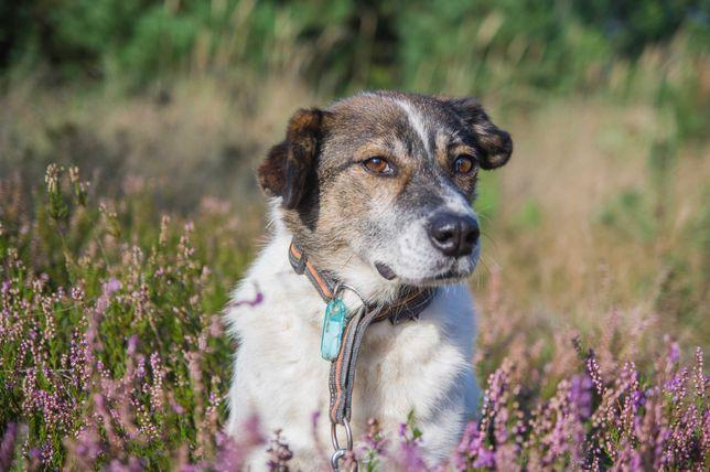 Runo, 6 letni pies ideał do adopcji.