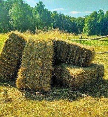 Продам сено в тюках-разнотравье