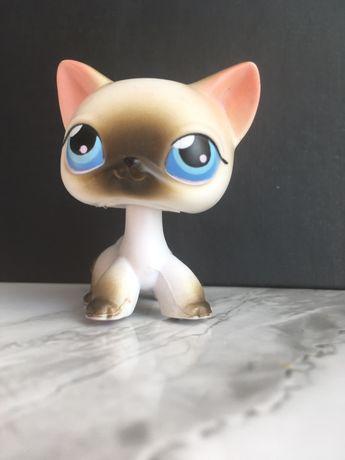 Littlest pet shop/ kot shorthiar