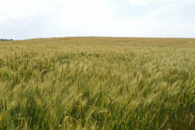 Dzierżawimy grunty rolne pod farmy fotowoltaiczne