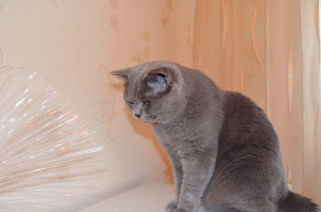 Нужны шикарные котята брид и шоу класса? Приходите на вязку!