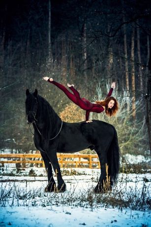 Фризские лошади в наличии Киев