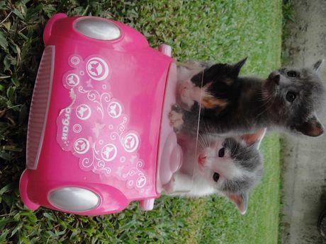 gatinhos hiper fofinhos