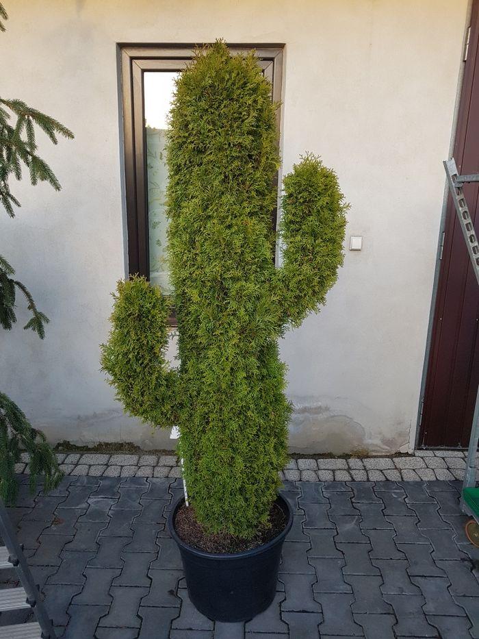 Rośliny ozdobne Radom - image 1