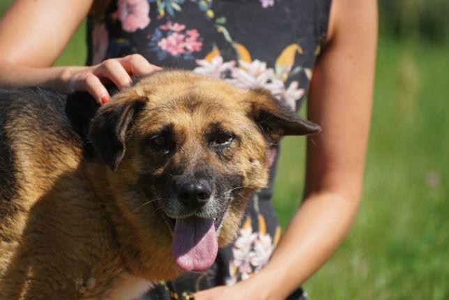 HEROS - fajny pies w typie owczarek szuka domu