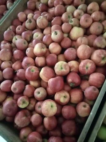 Jabłko Jonagored z KA po Smartfreshu