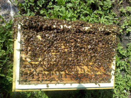 Sprzedam odkłady pszczele