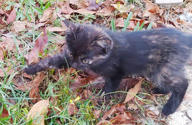 Кошечки мышеловки милые и игривые черепаховый окрас котенок кошка