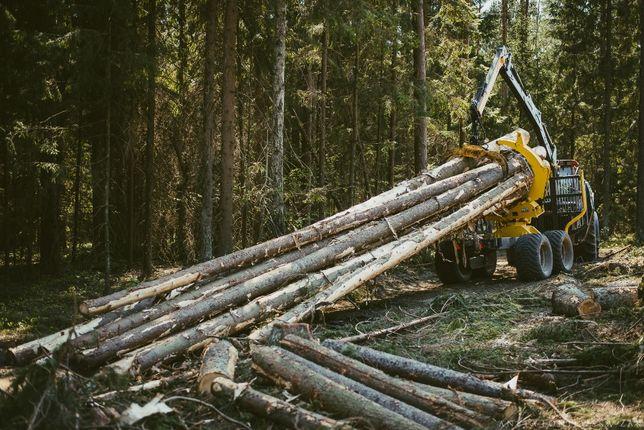 Wycinka lasu Podlasie Białystok Knyszyn